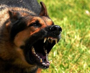 Cariati Law Toronto, Ontario Injury Lawyers Personal Injury Dog Bite Aggressive Dog